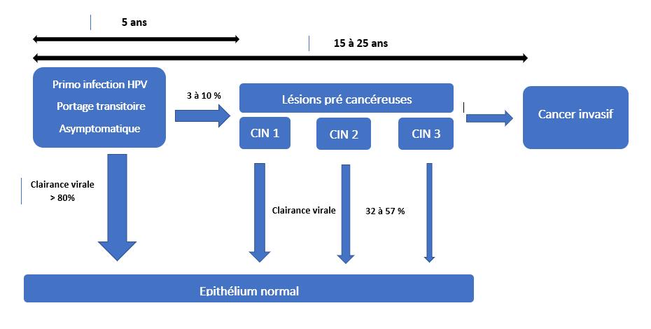 papillomavirus duree d incubation)